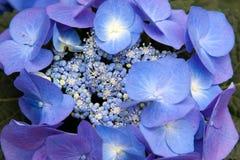 Flores púrpuras en el jardín botánico Fotos de archivo libres de regalías