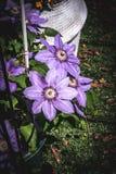 Flores púrpuras en el sol de la tarde ilustración del vector