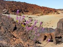 Flores púrpuras en el volcán Fotos de archivo