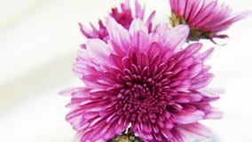 Flores púrpuras en fondo de oro Fotografía de archivo