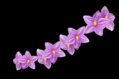 Flores púrpuras en fondo negro imagen de archivo