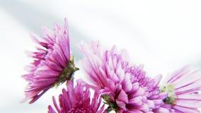 Flores púrpuras en fondo plateado Foto de archivo libre de regalías