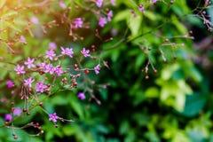 Flores púrpuras en fondo verde en foco selectivo Fotos de archivo