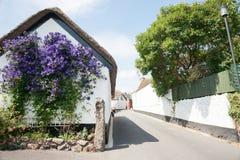 Flores púrpuras en la pared blanca. Imagenes de archivo