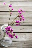 Flores púrpuras en las botellas de cristal Fotos de archivo libres de regalías