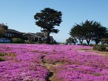 Flores púrpuras en prado Fotografía de archivo