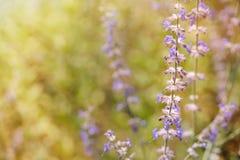 Flores púrpuras en sol foto de archivo