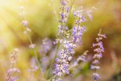 Flores púrpuras en sol fotografía de archivo