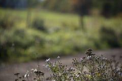 Flores púrpuras en un campo imágenes de archivo libres de regalías