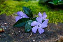 Flores púrpuras en una superficie marrón fotos de archivo