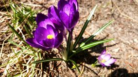 Flores púrpuras encantadoras Foto de archivo