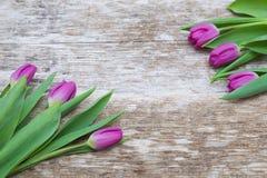 Flores púrpuras frescas del tulipán en la tabla de madera Fotos de archivo libres de regalías