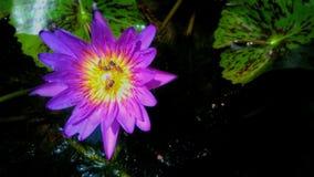 Flores púrpuras hermosas Imagen de archivo libre de regalías