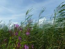 Flores púrpuras hermosas foto de archivo