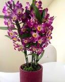 Flores púrpuras hermosas en un florero de cerámica Fotografía de archivo