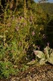 Flores púrpuras lindas Imagenes de archivo