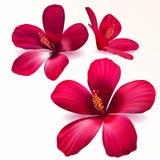Flores púrpuras realistas del vector Fotos de archivo libres de regalías