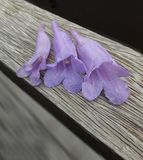 Flores púrpuras salvajes fotografía de archivo libre de regalías