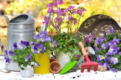 Flores púrpuras y accesorios que cultivan un huerto Foto de archivo