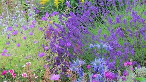 Flores púrpuras y amarillas en Washington metrajes
