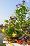 Flores púrpuras y cielo azul fotos de archivo libres de regalías