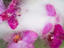 Flores púrpuras y rosadas de la orquídea Foto de archivo libre de regalías
