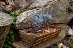 Flores púrpuras y verdes hermosas en un tenedor Fotos de archivo libres de regalías
