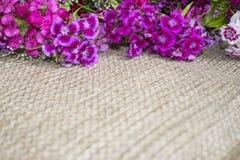 Flores púrpuras y violetas brillantes en un fondo de la arpillera Imágenes de archivo libres de regalías