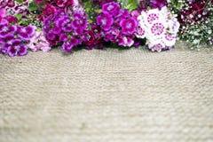 Flores púrpuras y violetas brillantes en un fondo de la arpillera Foto de archivo libre de regalías