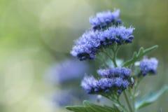 Flores p?rpuras en el jard?n foto de archivo