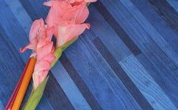 Flores, palillo de ídolo chino, vela para la adoración, Tailandia Imagen de archivo libre de regalías