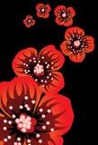 Flores--papoila ilustração royalty free