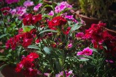 Flores para el fondo hermoso fotografía de archivo