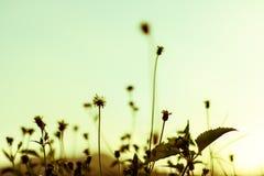 Flores para o papel de parede e o fundo Foto de Stock Royalty Free