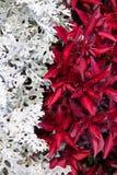 Flores para a rua Imagens de Stock Royalty Free