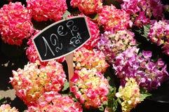 Flores para a venda Fotografia de Stock