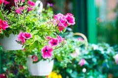 Flores para a venda Fotos de Stock Royalty Free