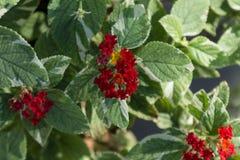 Flores pasadas del jardín Fotos de archivo libres de regalías