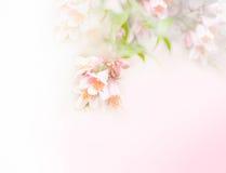 Flores Pastel Foto de Stock Royalty Free