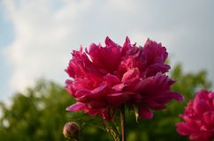 Flores pela luz do dia fotografia de stock royalty free