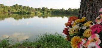 Flores pelo lago Imagem de Stock Royalty Free