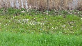 Flores pelo rio foto de stock