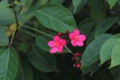 Flores pelo rio Fotos de Stock Royalty Free