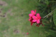 Flores pelo rio Imagens de Stock