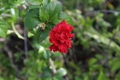 Flores pelo rio fotografia de stock