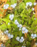 Flores pequenas imagens de stock royalty free