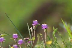 Flores pequenas agradáveis da floresta imagens de stock royalty free