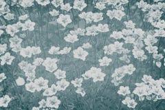 Flores pequenas bonitas Fotos de Stock