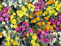 Flores pequenas bonitas coloridas no parque fotografia de stock