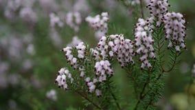 Flores pequenas bonitas com fundo verde Imagem de Stock Royalty Free